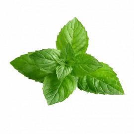 Mint Leaves/Pcs - Bulkbox Wholesale